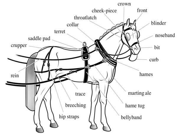 harness  u0026 saddle making